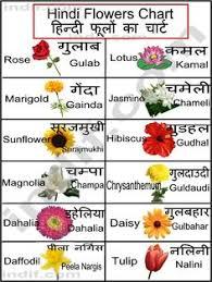 Resume Means In Hindi Hindi Typing Alt Character Code Type Hindi Font Shortcut Kruti