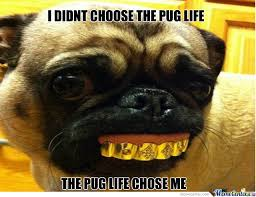 Pug Birthday Meme - depressed pug meme 28 images if you don t give jackeus99 far cry