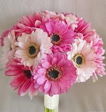 gerbera bouquet touch pink fuchsia gerbera bouquet