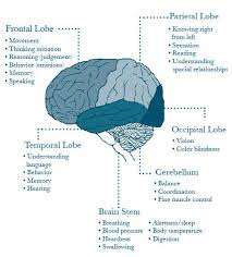 Which Part Of The Brain Consists Of Two Hemispheres Best 10 Brain Anatomy Ideas On Pinterest Brain Anatomy And