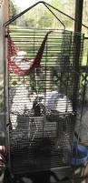 Large Ferret Cage Best Ferret Cage For Sale In Pocahontas Arkansas For 2017