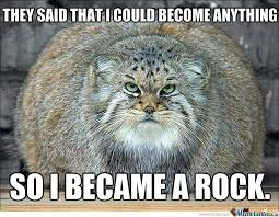 Fat Cat Meme - fat cat becomes a rock by lilmisszv meme center