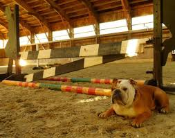dog barn barn dogs how to make good manners stay smartpak blog
