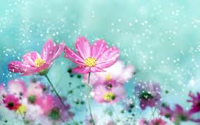 Wallpaper With Flowers Cute Flower Wallpaper 14742 7006293