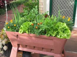 healthy fall vegetable container garden ideas for breast cancer