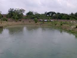 fish farming business business 2 nigeria