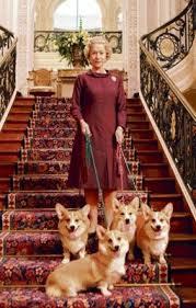 queen elizabeth dog pembroke welsh corgi alert and affectionate corgis queen