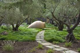ornamental grass garden ideas landscape contemporary with olive