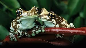 frog wallpaper 50805 1920x1080 px hdwallsource com