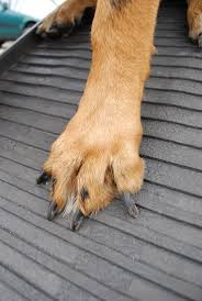 nissan rogue for dogs 21 best super helper for senior disabled dogs images on pinterest