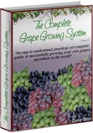 How To Grow Grapes In Your Backyard by Free Grape Growing Tips And Help To Grow Your Own Grapes Who