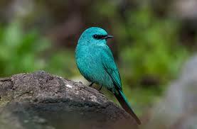 Canopy Birds by Top 25 Wild Bird Photographs Of The Week 40