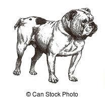 bulldog illustrations and stock art 5 389 bulldog illustration