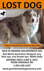 australian shepherd new hampshire pisgah pet care services home facebook