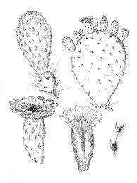 prickly pear cactus coloring page eliolera com