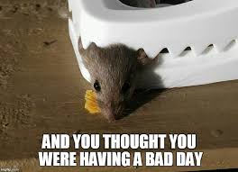 Having A Bad Day Meme - and you thought you were having a bad day imgflip
