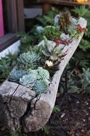 water trough planter 50 best succulent garden ideas for 2017