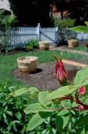 front yard vegetable garden revealed the art of doing stuffthe
