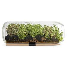 sedum terrarium bottle window garden terrarium supplies