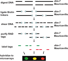 dna mapping high density detection of restriction site associated dna markers