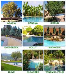 Good Backyard Trees by Best 25 Landscaping Around Pool Ideas Only On Pinterest