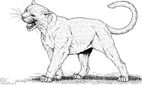mountain lion coloring page feed