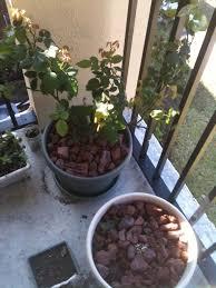 Soil Mix For Container Gardening - container soil mixes gardening pinterest gardens urban