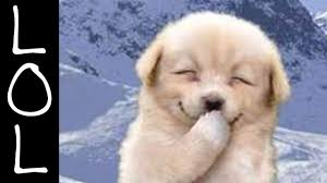 funny clips of dogs 25 free hd wallpaper funnypicture org