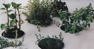 plante cuisine 5 plantes aromatiques que tu peux facilement faire pousser dans ta