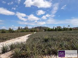 800 square meters land plot in a area for sale jwproperty