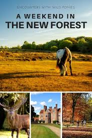 New Hampshire travel pony images Best 25 new forest ideas new forest england jpg