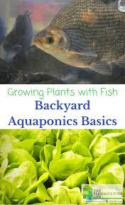 growing plants u0026 fish backyard aquaponics basics the