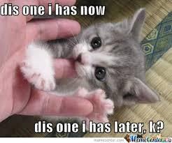 Kittens Memes - kitten memes image memes at relatably com