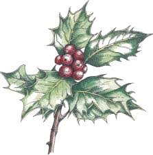 how to paint and draw holly for christmas cards with judith milne