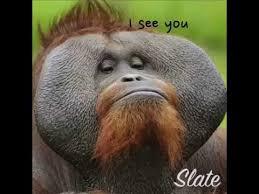 Gorilla Meme - gorilla meme youtube