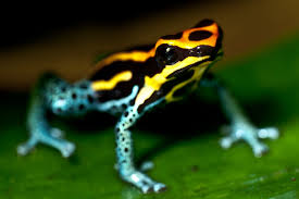 top 10 most poisonous animals in the world