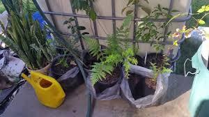 australian native edible plants native australian edible plants youtube