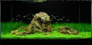 home accessories excellent aquascape designs with fish and