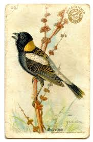 best 25 vintage birds ideas on pinterest bird prints any birds