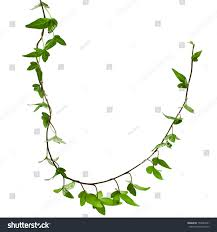 border frame made green climbing plant stock photo 159984431