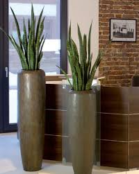 office plant images of artificial office plant displays office landscapes