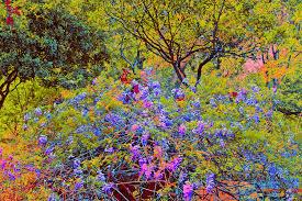 Zilker Botanical Garden Flowers At Zilker Botanical Gardens In