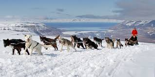 spitsbergen excursions summer dog sledding in longyearbyen