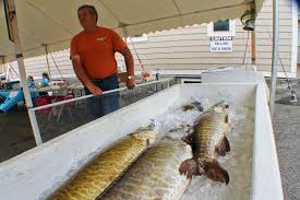 muskie derby ploye festival draw crowds to fort kent fiddlehead