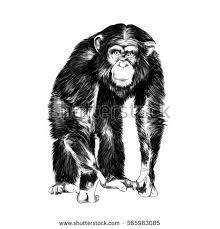 monkey sketch vector stock vector 565983085 shutterstock