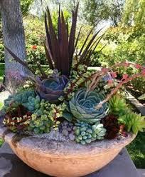 resume modernos terrarios suculentas παχύφυτα λουλούδια του κήπου μου pinterest fuego macetas y
