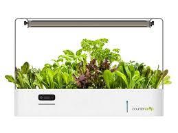 jardin de cuisine avec countercrop plantez votre jardin dans votre cuisine