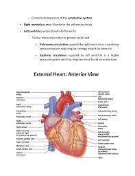 External Heart Anatomy Anatomy Of The Heart