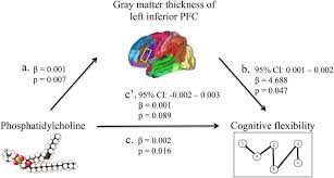 frontiers inferior prefrontal cortex mediates the relationship