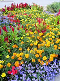 100 annual flower bed colorful flower bed of annual flowers